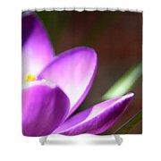 Spring Purple Shower Curtain