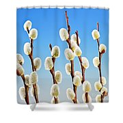 Spring Pussy Willows Shower Curtain by Elena Elisseeva