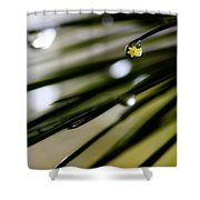 Spring Rain On The Pines Shower Curtain