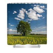 Spring Rhapsody Shower Curtain by Davorin Mance