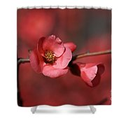 Spring Richness - Flowering Quince Shower Curtain