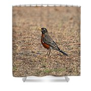 Spring Robin 2014 Shower Curtain