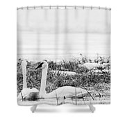 Spring Romance Shower Curtain