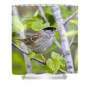 Spring Scene Shower Curtain