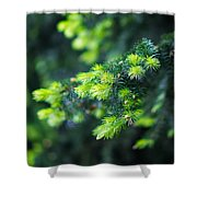 Spring Shoots Shower Curtain