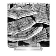 Spring Shrooms Shower Curtain