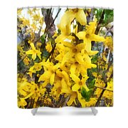 Spring - Sprig Of Forsythia Shower Curtain