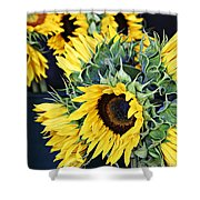 Spring Sunflowers Shower Curtain