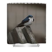 Spring Swallow Shower Curtain