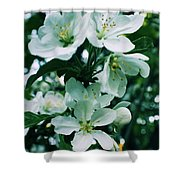 Spring Time Blossoms Shower Curtain