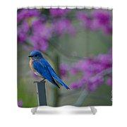 Spring Time Blue Bird Shower Curtain