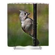 Spring Titmouse 1 Shower Curtain