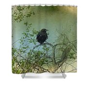 Spring Tree And Crow Shower Curtain