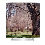 Spring Tree At Soft Rosy Spring In The Garden Shower Curtain by Jenny Rainbow