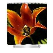 Spring Tulip Shower Curtain