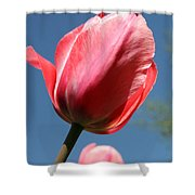 Spring Tulip Blues Shower Curtain