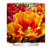 Spring Tulip Flowers Art Prints Yellow Red Tulip Shower Curtain