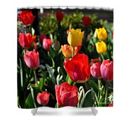 Spring Tulip Garden Shower Curtain