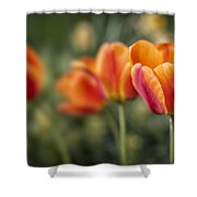 Spring Tulips Shower Curtain by Adam Romanowicz