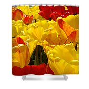 Spring Tulips Art Prints Yellow Red Tulip Flowers Shower Curtain