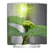 Spring Unfolding Shower Curtain