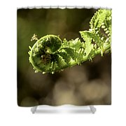 Spring Unfurled Fiddlehead Shower Curtain