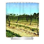 Spring Vineyard Ll Shower Curtain