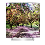 Spring Walkway Lined By Blooming Cherry Trees Shower Curtain