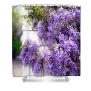 Spring Wisteria Shower Curtain