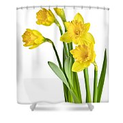 Spring Yellow Daffodils Shower Curtain