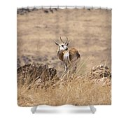 Springbok V3 Shower Curtain