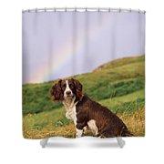 Springer Spaniel Dog Shower Curtain
