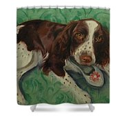 Springer Spaniel With Shoe Shower Curtain