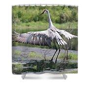 Springing Sandhill Crane Shower Curtain