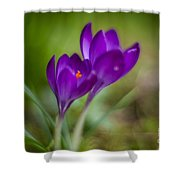 Springs Blossoms Shower Curtain
