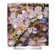 Spring's First Blush Shower Curtain