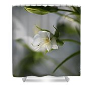 Spring's Late Bloom Shower Curtain