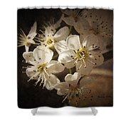 Springtime Blossoms Shower Curtain
