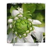 Springtime Bud Shower Curtain