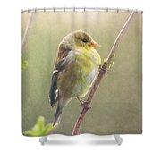 Springtime Goldfinch Shower Curtain