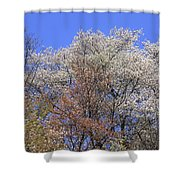 Springtime In Great Balsam Mountains Shower Curtain