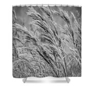 Springtime In The Field - Bw Shower Curtain