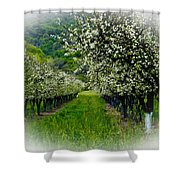 Springtime In The Orchard Shower Curtain by Bill Gallagher