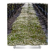 Springtime In The Vineyards Shower Curtain
