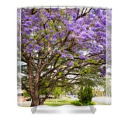 Springtime Jacaranda Tree Shower Curtain