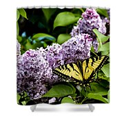 Springtime Lilac And Butterfly Shower Curtain