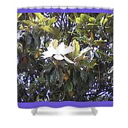 Springtime Magnolia  Shower Curtain