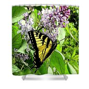 Springtime Moments- The Butterfly And The Lilac  Shower Curtain