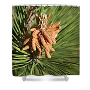 Sprintime Pine Shower Curtain