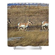Sprinting Pronghorn Shower Curtain